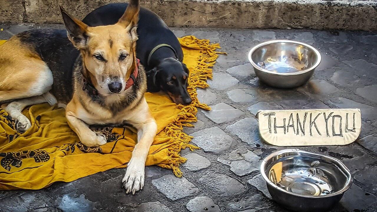 Obdachlose Titelbild kirkandmimi pixabay