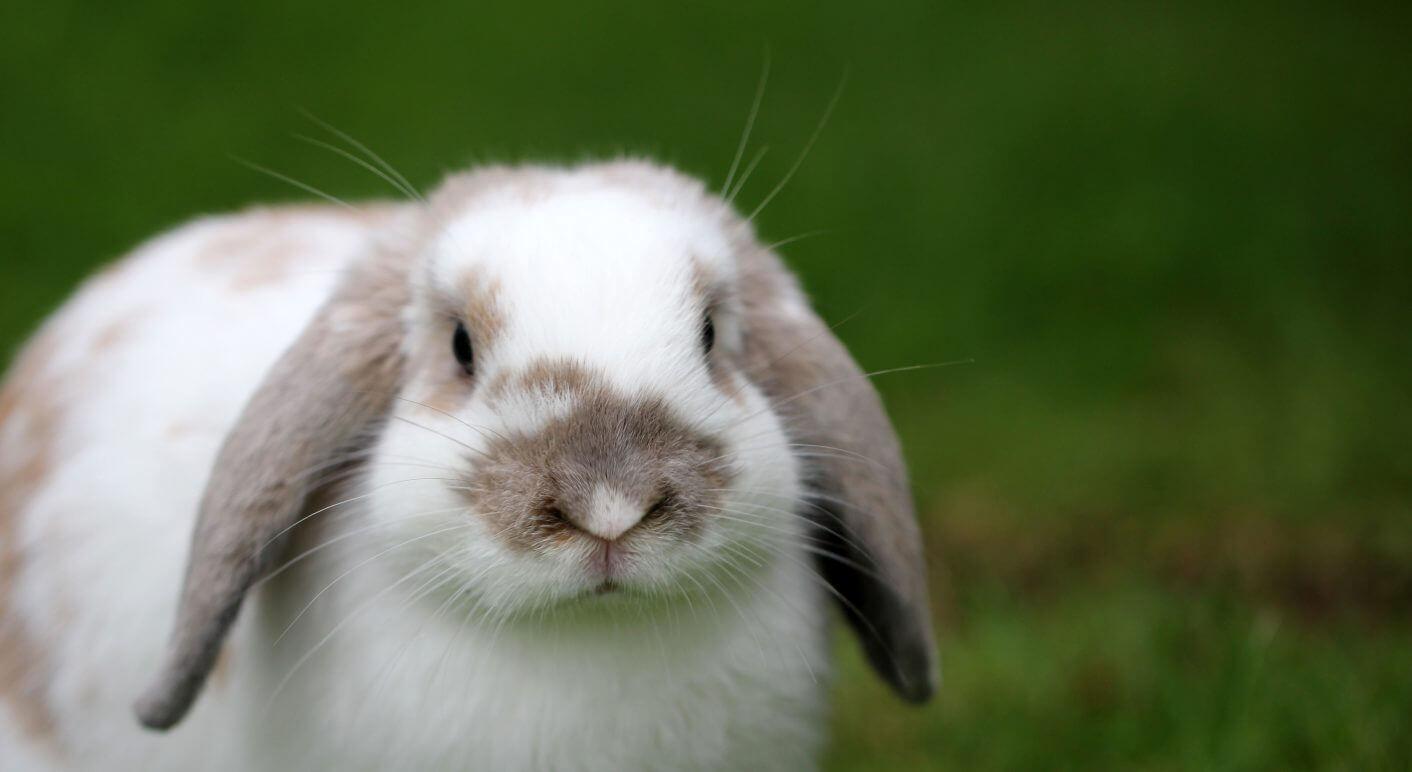 Dieser Hase bleibt hier. Foto: Sandy Millar on Unsplash.org