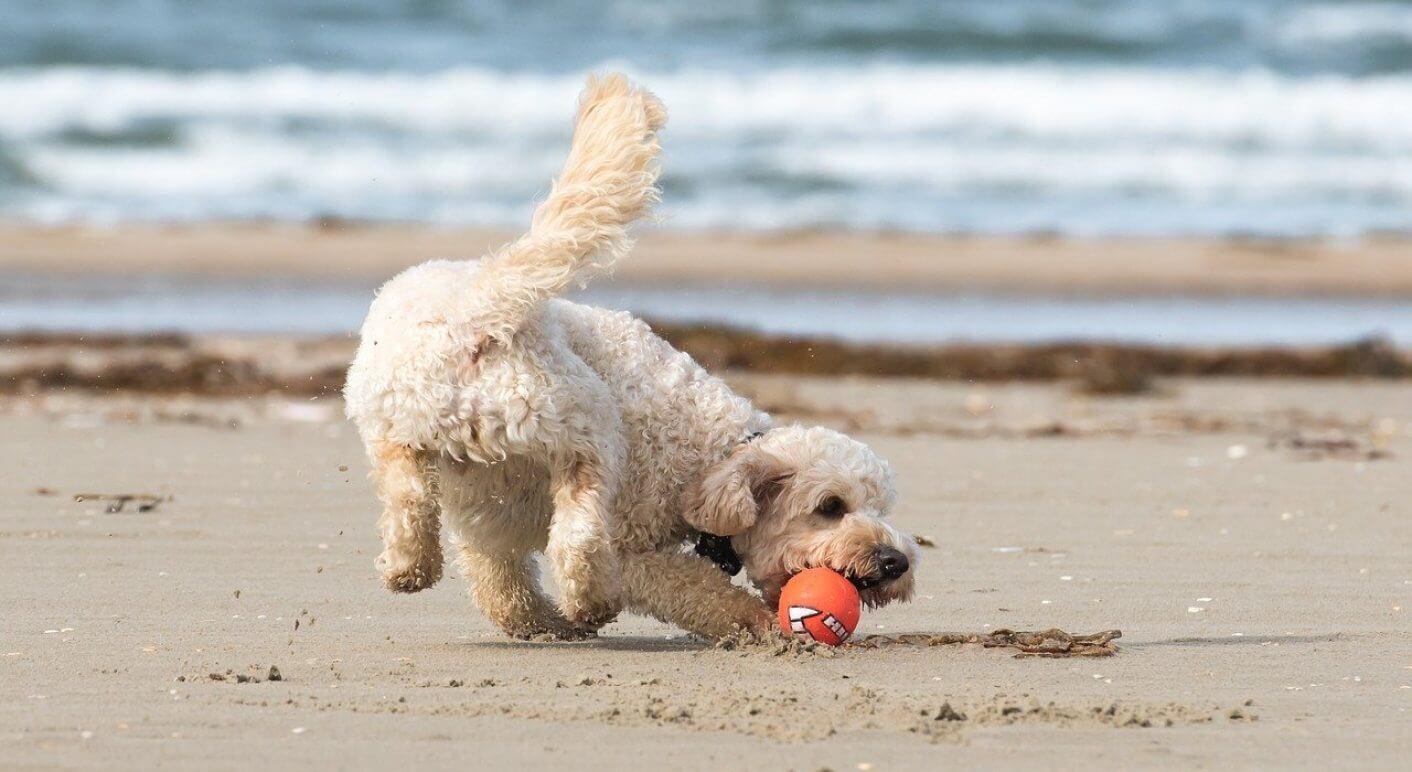 beach-2778535_1280