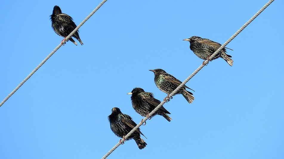 birds-4344446_960_720