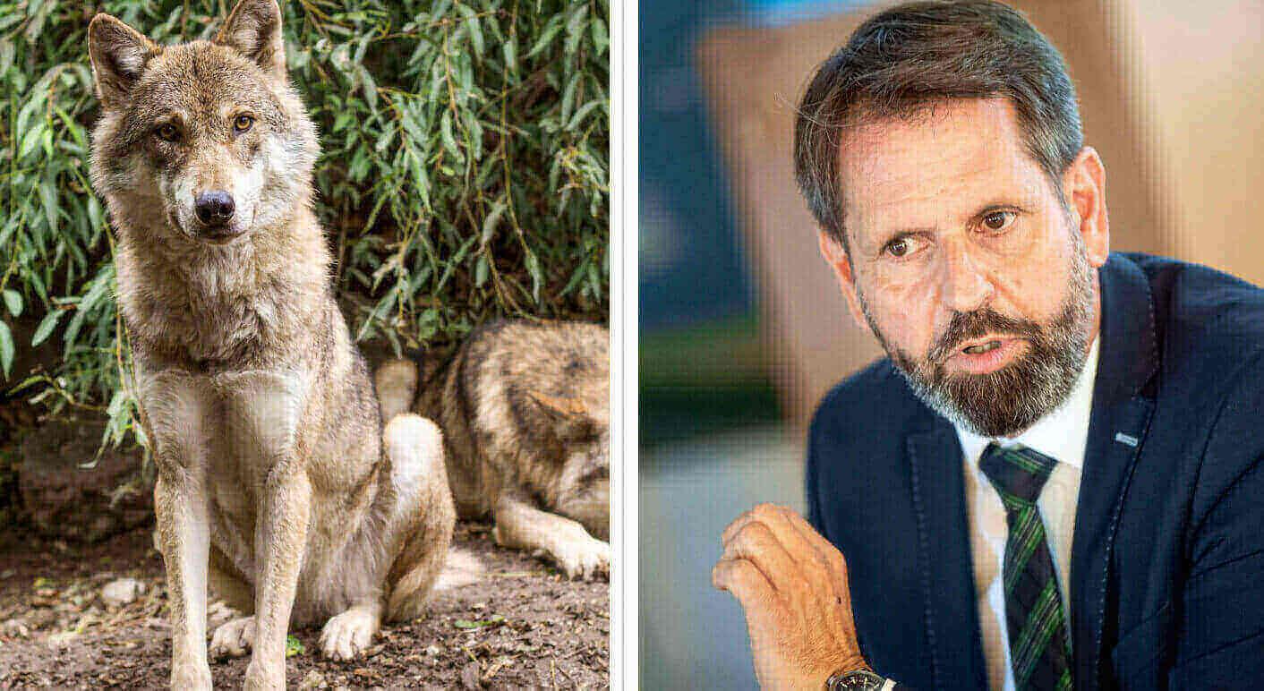 Olaf Lies und zwei Wölfe