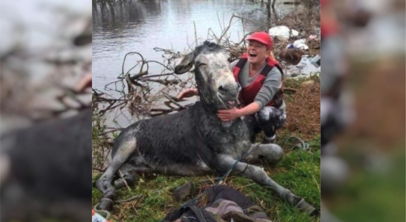Ein Esel wurde aus Hochwasser gerettet
