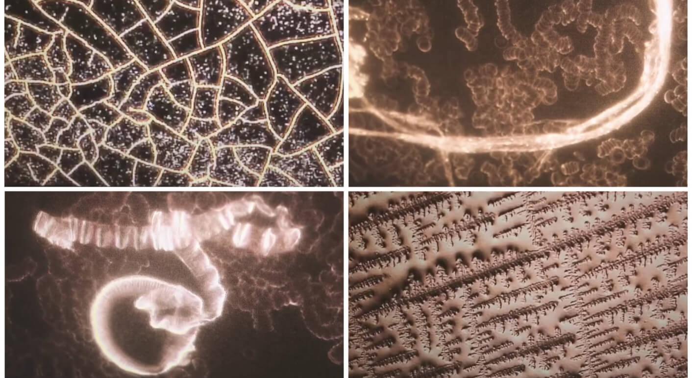 Blutbild Header-Collage